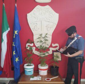 carabinieri fiscaglia marijuana