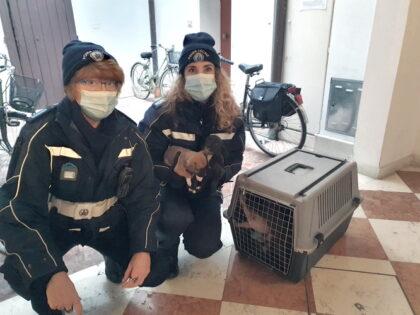cuccioli salvati polizia locale ferrara
